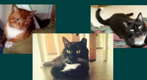 3 Wonderful Cats Still Searching for a Home