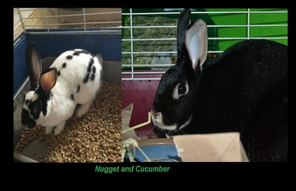 Nugget & Cucumber from Friends of Willow